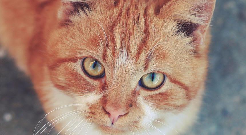 猫を飼っている&理解者編