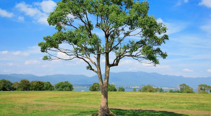 植林de婚活~愛の樹を植えよう~