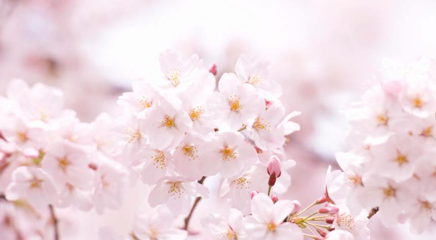 お花見好き編